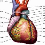 heart opt