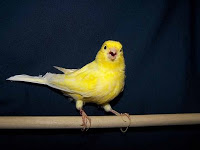 physician burnout are physicians the canary in the coal mine of medicine2