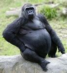 work life balance for physicians 800 pound gorilla medical career