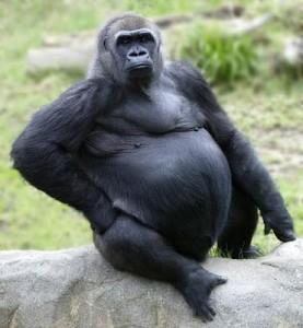 gorilla-277x300
