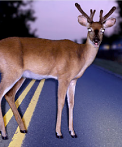 physician-burnout-wellness-program-frozen-with-fear-deer-in-the-headlights