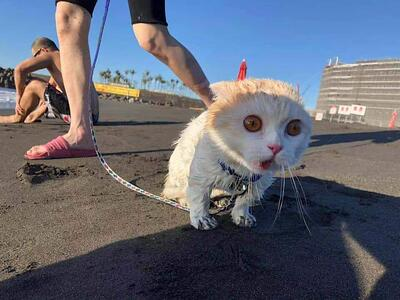 wet-cat-on-the-beach-pandemic-survival-guide-for-physicians