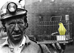 doctors-are-canary-in-the-coal-mine-of-medicine-physician-resilience